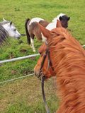 Astride a horse. Top view. The horse looks at a pony Royalty Free Stock Image