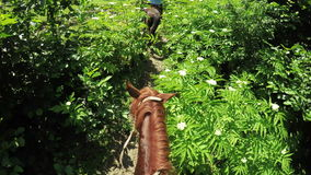 Astride on horse stock video footage