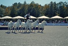 Astride horses. 01.09.2012. Ukraine, Donetsk. Competitions on a show jumping Donbass Ekvitsentr Stock Photo