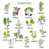 Astringent herbs. Hand drawn set of medicinal plants Stock Photos