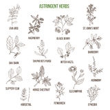 Astringent herbs. Hand drawn set Stock Images