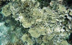 Astrolabium Rafowi korale Obrazy Royalty Free