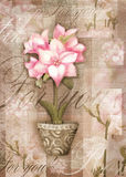 Astromeria flower in the pot with pattern. Postcard. Stock Image