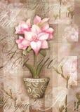 Astromeria kwiat w garnku z wzorem pocztówka Obraz Stock