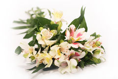 Astromeria On White (flowers) Royalty Free Stock Images