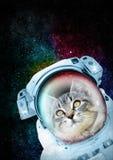 Astronaut Cat die de ruimte onderzoeken Stock Foto's