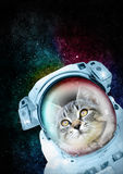 Astronaut Cat exploring the space. Cat in spacesuit exploring the universe. Any cat is a great explorer moved by curiosity and the need of discover new worlds Stock Photos