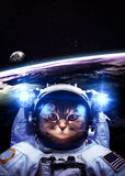 An astronaut cat floats above Earth. Stars provide Royalty Free Stock Image