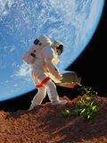 Astronaut grass plants. Royalty Free Stock Image