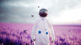 Astronaut with butterflies in lavender field. concept of future. broadcast. Realistic 4k animation. Stock Footage