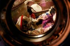 Astronauta em uma cápsula Imagem de Stock