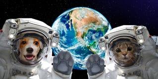 Astronautas do gato e do cão no fundo do globo fotos de stock