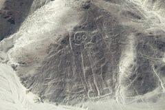 Astronautbilden på Nazcaen fodrar i Peru Arkivfoton
