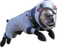 Astronaute drôle Dog, l'espace, d'isolement, combinaison spatiale image stock
