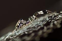 astronautyczny pająk Obraz Royalty Free