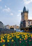 Astronomische Uhr Prags hinter Jan Hus Monument umgeben durch Narzissen mitten in Frühling lizenzfreie stockbilder