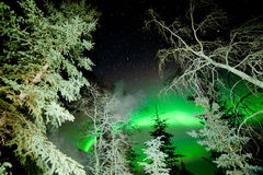 Star trails and Northern lights in sky over taiga. Astrophotography star trails with green glowing display of Northern Lights or Aurora borealis over boreal Royalty Free Stock Photos