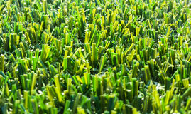 Astroturf much appreciated by manufacturers less appreciated by. Portion of the synthetic turf used for sports flooring Royalty Free Stock Photo