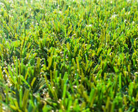 Astroturf much appreciated by manufacturers less appreciated by. Portion of the synthetic turf used for sports flooring Stock Photography