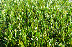 Astroturf much appreciated by manufacturers less appreciated by Stock Photos