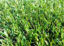 Astroturf much appreciated by manufacturers less appreciated by. Portion of the synthetic turf used for sports flooring Royalty Free Stock Photography