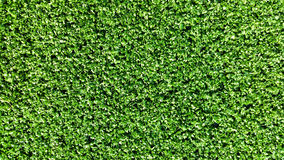 Astroturf much appreciated by manufacturers less appreciated by Stock Photography