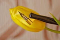 Astuce en métal pour la fin de stylo d'encre  le?ons d'orthographe et exercices de calligraphie Macro images stock