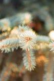 Astuces des branches impeccables images stock