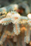 Astuces des branches impeccables Photographie stock
