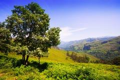 Asturian berg från hög poäng nära Llanes Arkivbild