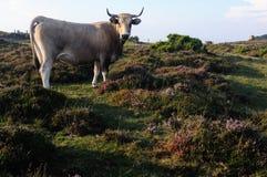 Asturias.Spain Stock Photography