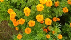 Flower Royalty Free Stock Image