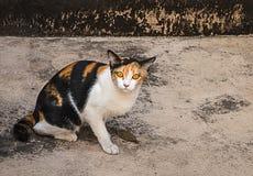 Asustan a los desamparados jovenes del gato Imagenes de archivo