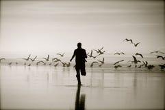 Asustar los pájaros Imagenes de archivo