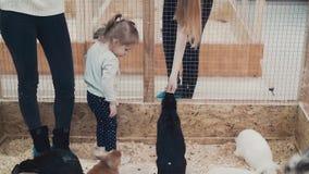 Asustaron a la niña del número de conejos almacen de metraje de vídeo