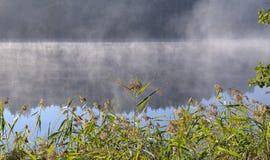Asveja (Dubingiai)湖,立陶宛。 库存照片
