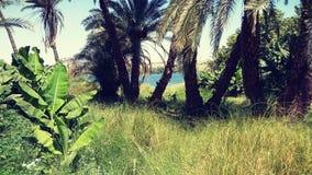 Aswan, Nile palmy i rzeka i zdjęcia stock