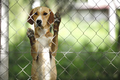 Asylum for dogs. On open stock photography