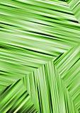Asymetrical abstrakte grüne Tapetenbeschaffenheit Lizenzfreie Stockfotografie