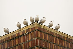 Asymmetrical Seagulls on Roof Corner Royalty Free Stock Images