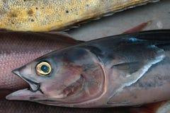 Atún de los peces marinos, escalas grises con un vientre rosado y ojos brillantes del amarillo, captura fresca, el Océano Índico Imagenes de archivo