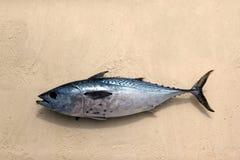 Atún recién pescado en la arena Imagenes de archivo