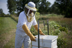 At The Beehive Stock Photo