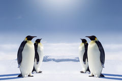 Free At The South Pole Royalty Free Stock Image - 3060696