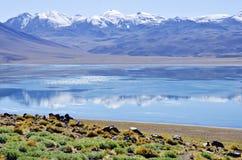 atacama智利沙漠盐水湖miscanti 免版税库存图片