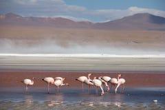 Atacama öken Royaltyfri Fotografi