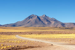 Atacama öken Arkivbilder