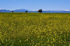 15-08-2017 Atacama öken, Chile Blomma öknen 2017 Royaltyfri Fotografi