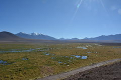 Atacama öken - geyser royaltyfria bilder
