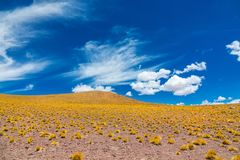 Atacama Altiplana pustyni góry i sawanna kształtujemy teren, Miniques w Chile, Ameryka Południowa Obraz Stock